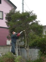 樹木のカット